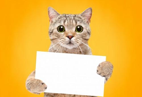 メッセージボードを持つ猫