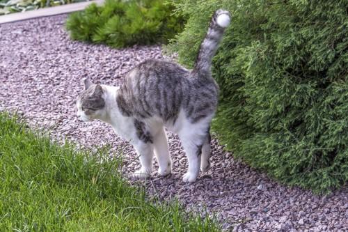 庭木にスプレーしようとする猫
