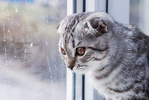 雨の降る外を見つめる猫