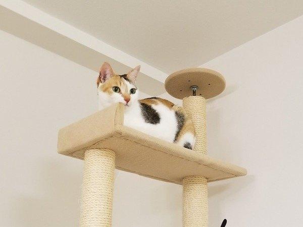 現在の女王猫