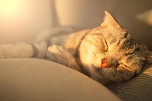 日差しと眠る猫