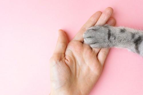 手を取り合う人と猫