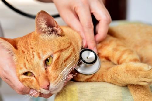病院にいる猫