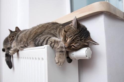 暖房器具の上の猫