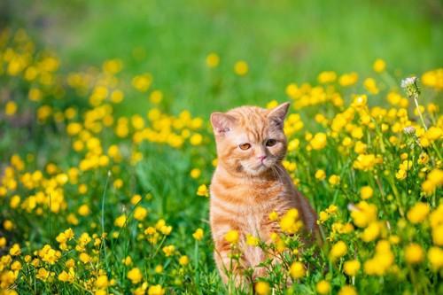緑と黄色のたんぽぽと猫