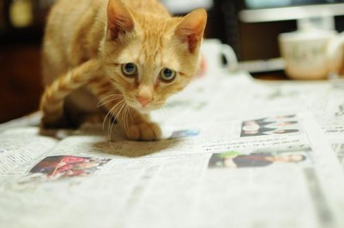 新聞の上の猫