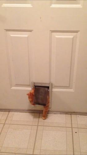 くぐろうとする猫