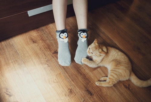 靴下を噛む猫