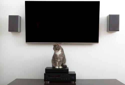テレビの前の機械の上に座る猫