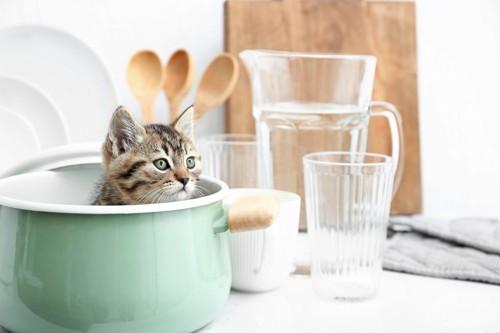 食器に入る猫