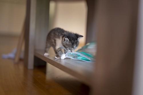 探検する子猫