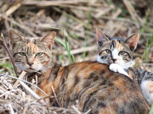 三毛猫2匹