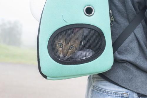 キャリーリュックの中にいる猫