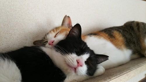 二匹向かい合わせ眠る