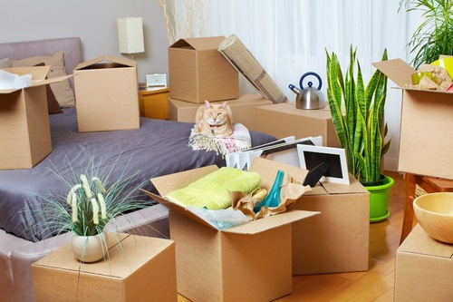 ベッドの上の猫とその周りに置かれた複数のダンボール箱