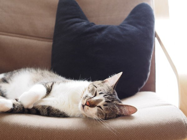 黒いクッションのそばで昼寝する猫