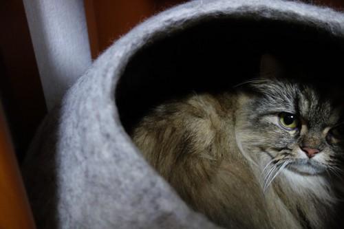 ペットハウスの中からこちらを見る猫