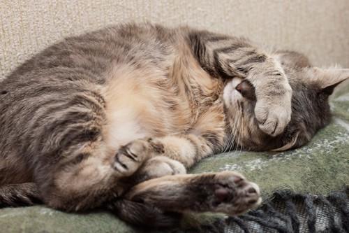 手で目を覆って眠る猫