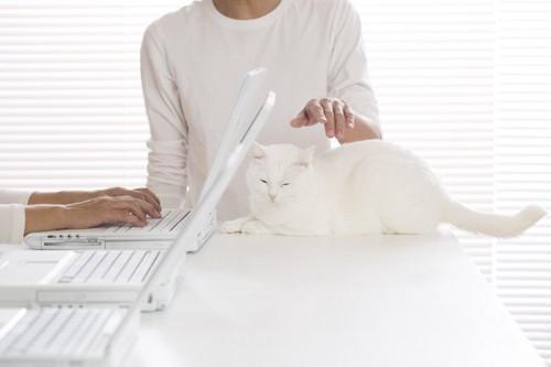 パソコンの後ろで撫でられる猫