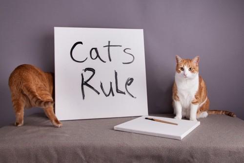 猫と猫のルールと書かれた紙