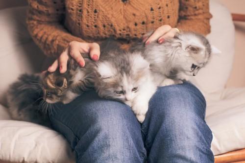 股の間にいる3匹の子猫