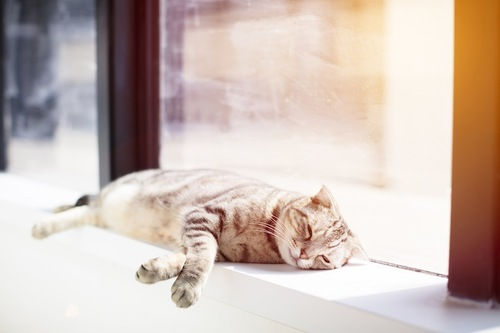 窓辺で日なたぼっこする猫