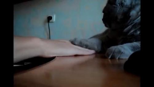 乗せ返す猫