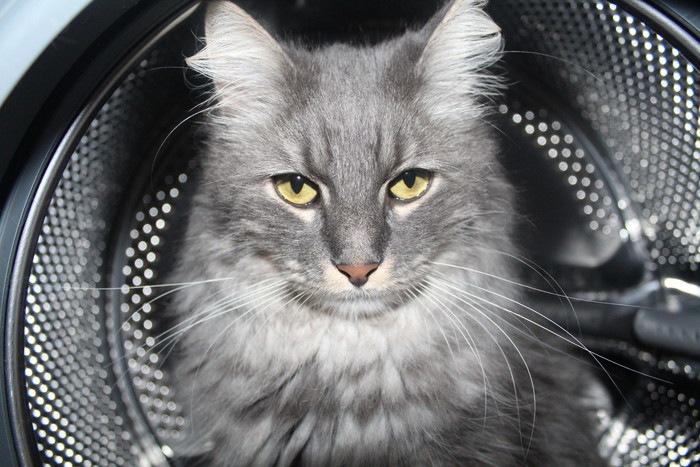 猫と洗濯槽