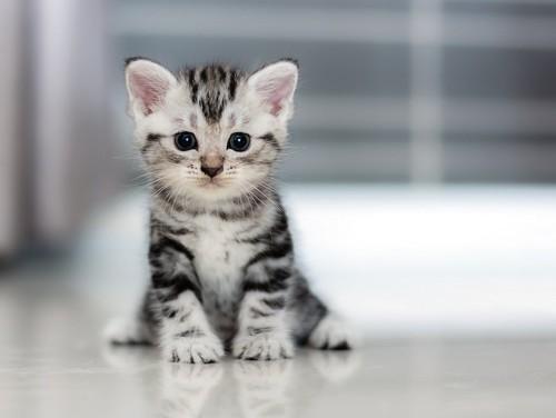 座ってこちらを見つめる子猫