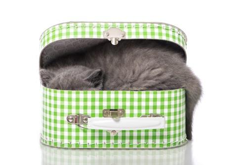 狭い箱の中に入る猫