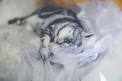 ビニールで遊ぶ猫