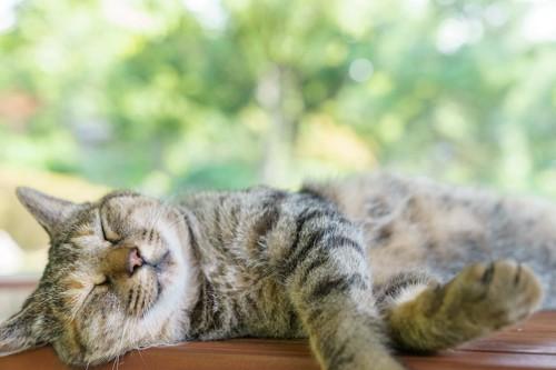 窓辺で昼寝をする猫