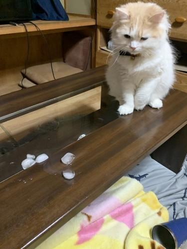 コップを倒してしまた猫