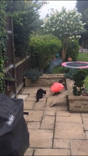 袋の下から猫登場