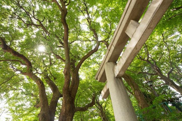 鳥居と緑の木