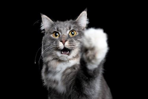 警告する猫
