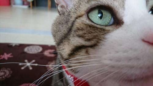 #口内炎を経験した猫#