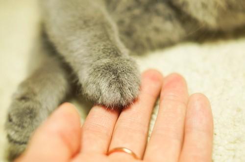 飼い主の手の上に置かれた猫の手