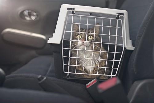 ケージに入れられて車に乗せられた猫