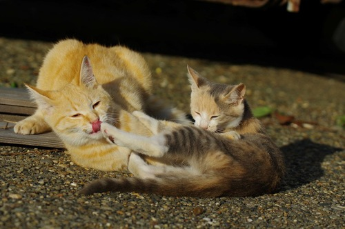 ケンカをする二匹の猫
