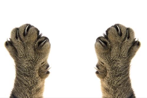 爪の伸びた猫の両手