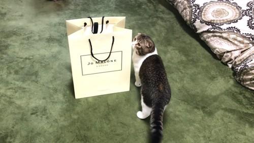 袋のに見る猫