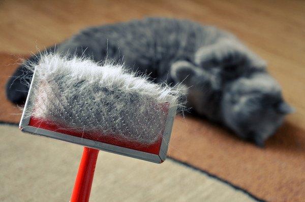 猫の抜け毛だらけのブラシ