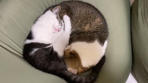 丸くなって寝る2匹の猫
