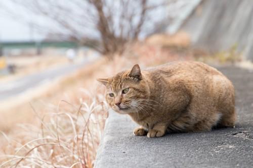 たたずむ野良猫
