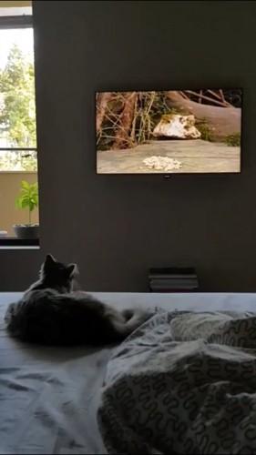 テレビに鳥が映る