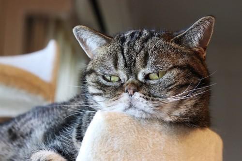 機嫌が悪そうな猫の顔