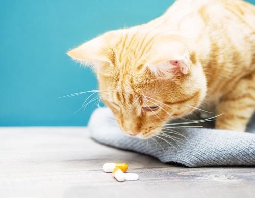置いてある錠剤を見ている猫