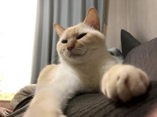 お腹の上で甘える愛猫