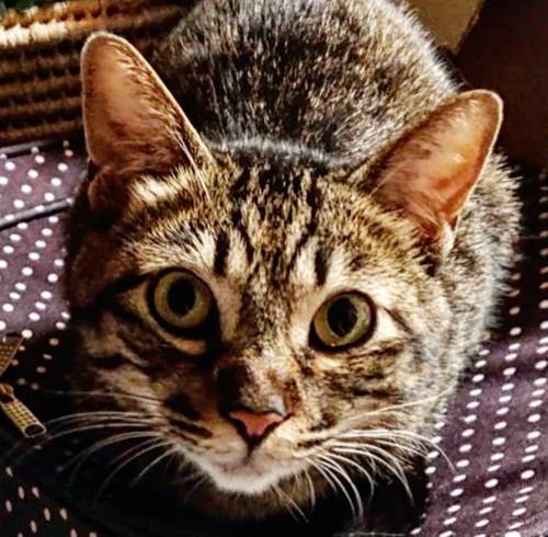 正面を見る子猫